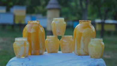 Photo of În familia Vuluță, se face miere de un secol. Albinele adună nectarul din teii și salcâmii ce cresc în spatele casei