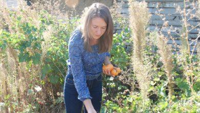Photo of Pui 20 de semințe în grădina ta și încolțesc doar 5? Încearcă semințele vii de la Grădina Moldovei!