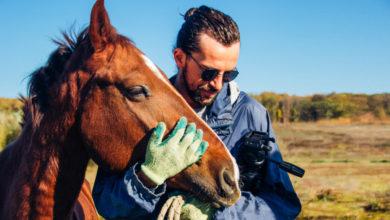 Photo of Cum patru cai îți pot schimba viața la 180 de grade