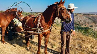 Photo of Valeriu Istrati vrea să dezvolte echitația naturală în satele Moldovei. Caii își pot ajuta stăpânii, fără să fie loviți cu biciul